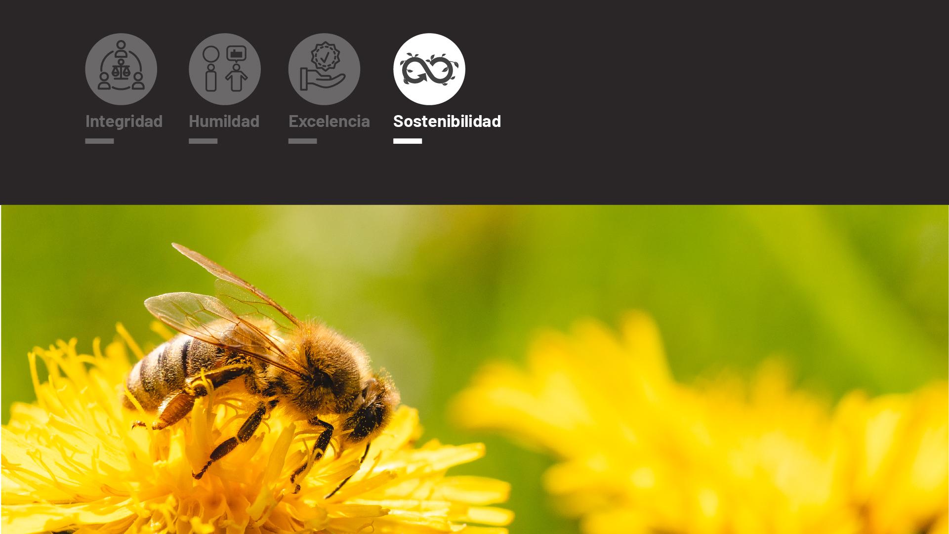 Valores de Friselva, empresa cárnica: Nuestra sostenibilidad y respeto por el medio ambiente