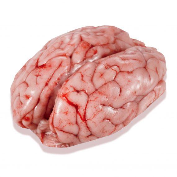 sesos - cerebro de cerdo friselva